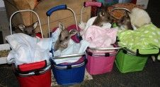 Baskets of joeys