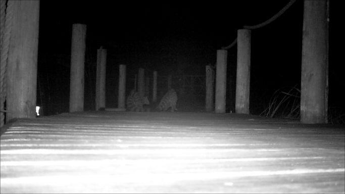 What stirs at night at Xigera Camp 1