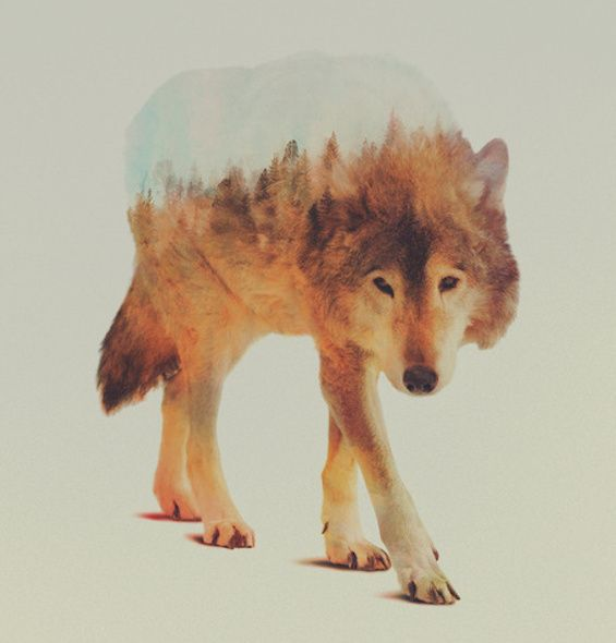 Andreas Lie's Double Exposures Fuse Animals With Idyllic Landscapes