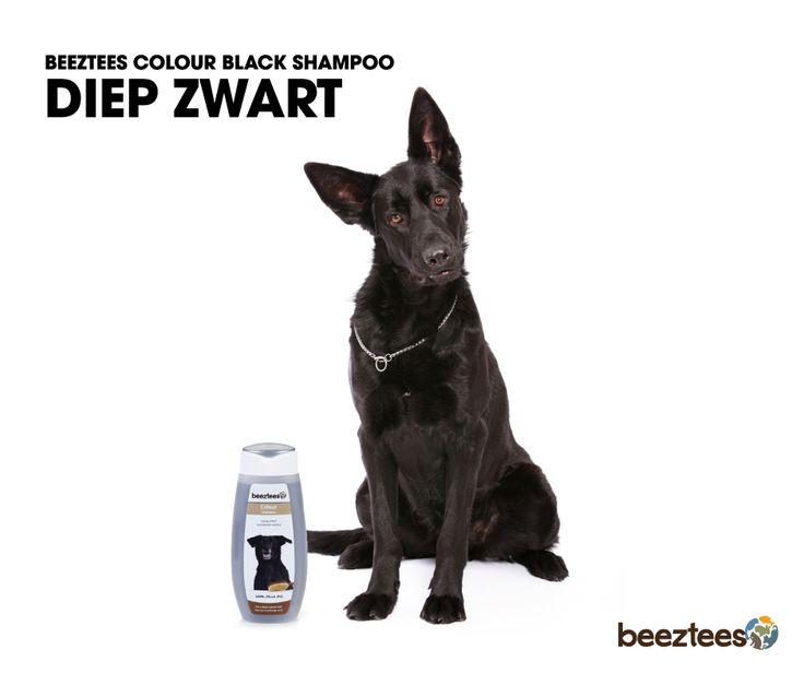 Beeztees Colour Black Shampoo. Geschikt voor honden met een zwarte vacht. De toevoeging van Olive Oil heeft een verzorgende werking en zorgt voor een soepele, zachte en gezonde vacht.