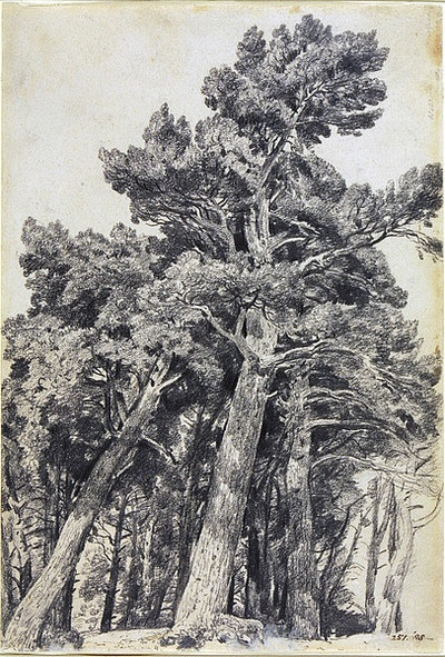 an analysis of the painting of a tree All this makes me want to collate literary tree descriptions and various tree drawings or paintings i'll start with this one, hope others join in the book i'm reading: excursion to tindari, by andrea camilleri the tree description, see p 90.
