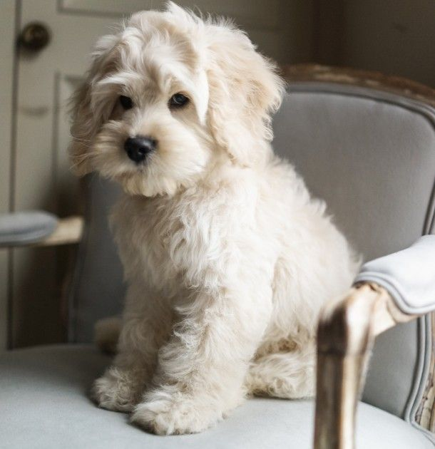 In Praise of the Pampered Pet