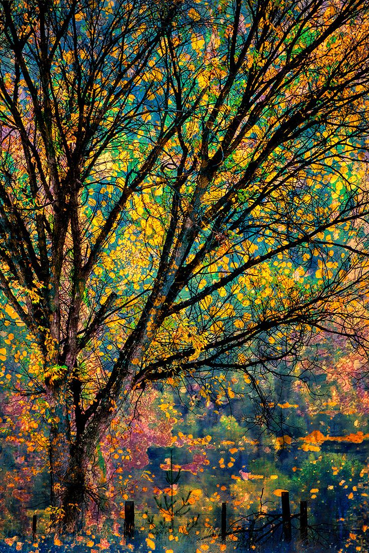 ~~Fall   autumn, Champion Lakes Provincial Park,Kootenay region of British Columbia, Canada   by Ursula Abresch~~