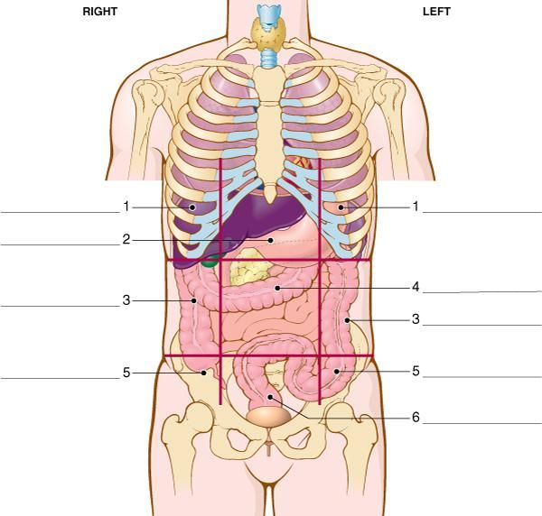 13 Best Anatomy Images On Pinterest Anatomy Health And Anatomy