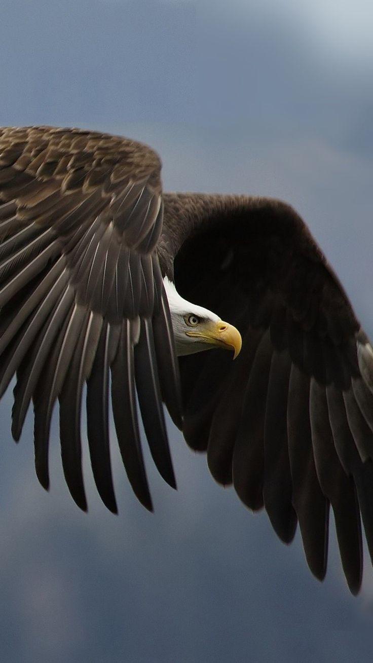 eagle, bird, predator, sky, swing