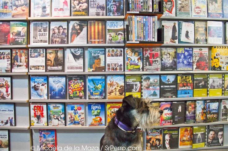 ¿Qué hacer cuando no para de llover? Ir al DVD Club y coger un par de buenas pelis. En ficciones tienen desde series como The Wire a cine de autor y estrenos. Son perrunos y simpáticos.     http://www.srperro.com/content/ficciones-relatores