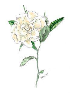gardenia drawing - Google Search