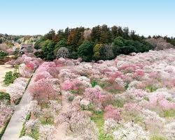 Kairakuen (偕楽園), Japan 1-2 Tokiwachō, Mito-shi, Ibaraki-ken, Japan