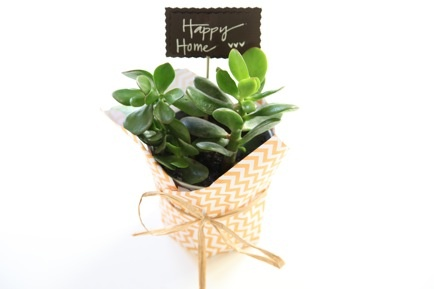 housewarming gift: House Warm Gifts Plants, Gifts Ideas, Gifts Written, Housewarming Plants, Homemade Gifts, Bridal Shower Gifts, Gifts Out, Hostess Gifts, Housewarming Gifts