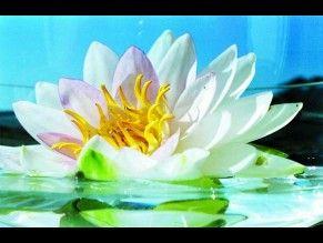 """""""Blaženost"""" , Meditativní obraz se silným energetickým zářením za pomoci síly slunce a přírody. Lotosový květ je symbolem čistoty. Do domu vnáší mír, klid , tvořivost a duchovní růst. """"Bliss"""", meditative painting with a strong energetic radiation with the help of power of the sun and nature. The lotus flower is a symbol of purity. The house brings peace, tranquility, creativity and spiritual growth."""