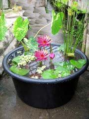 Water container gardening is perfect for those who don't have the space for a water feature in their garden.