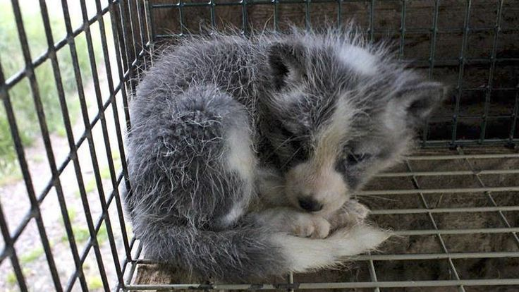 December 2016 Petition · Stop the use of REAL fur in the fashion industry · Change.org We need more support please sign and share #BanFur #AnimalRights #GoVegan