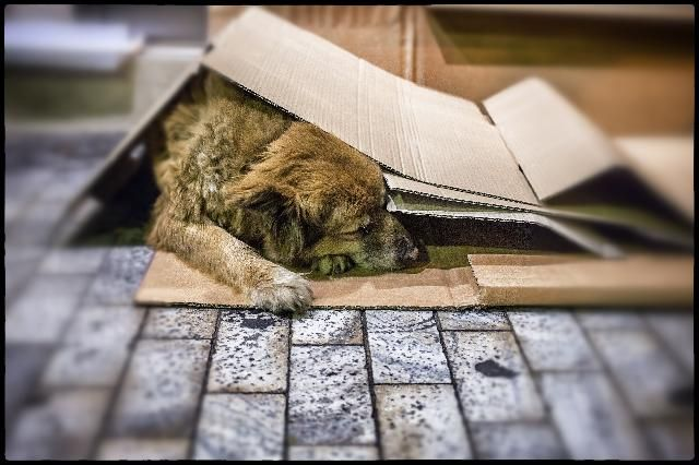 Can Applied Economics Save Homeless Puppies?