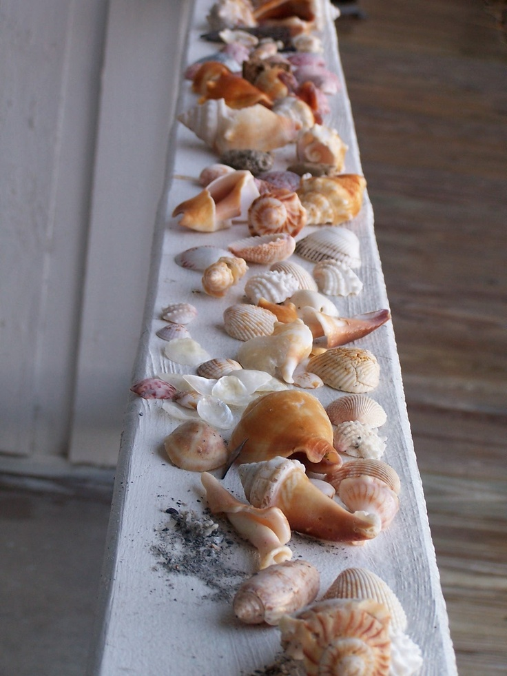 Sea shells, Indian Rock Beach, FL; I spy Florida Fighting Conch, Cat's Paw, Calico Scallop, Olive, Cockle among them... nice!