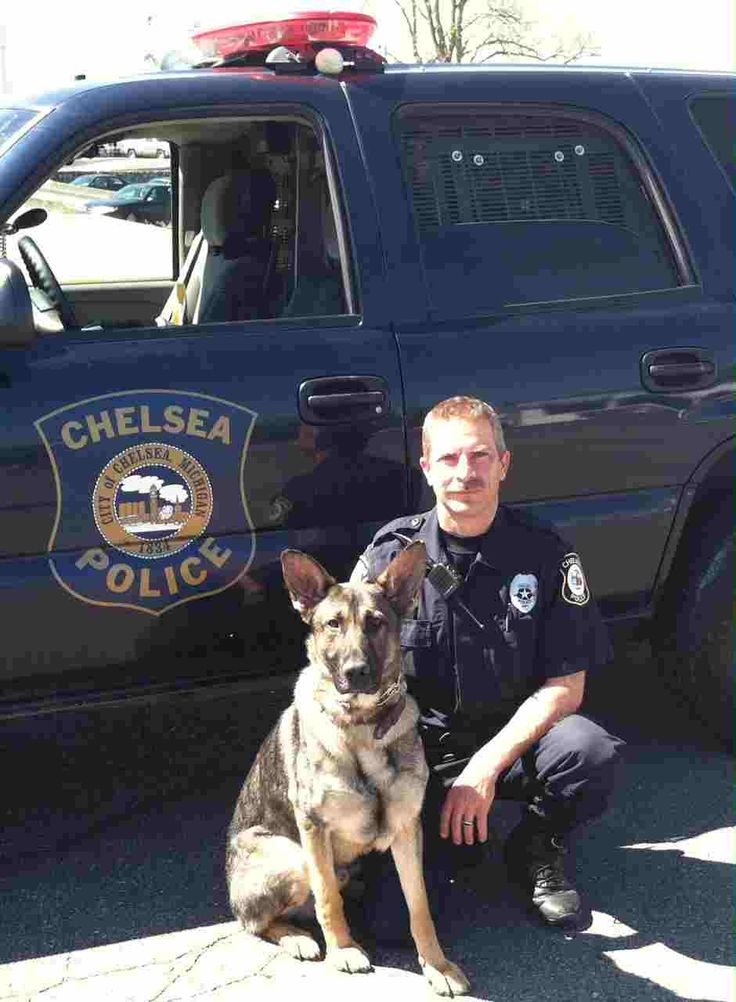 The officer who started and kept Chelsea Police Department's canine program going has now retired, along with his two current police dogs and the program itself.