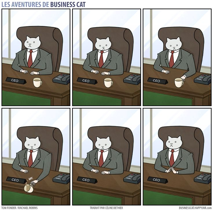 business-cat-3