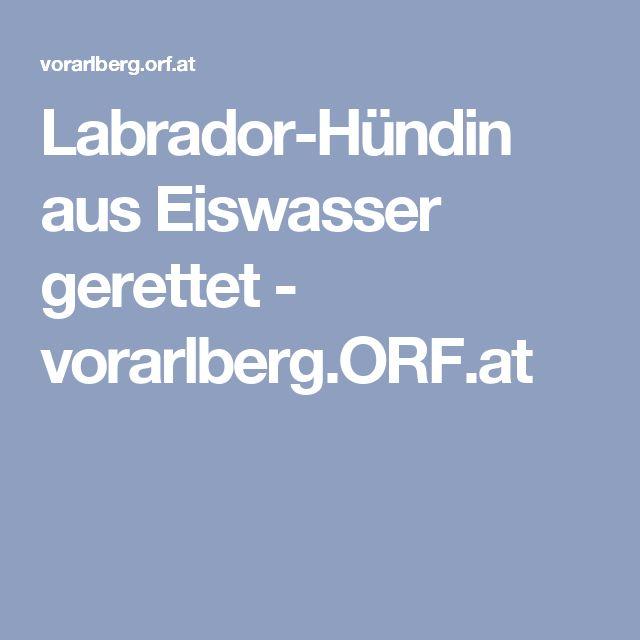 Labrador-Hündin aus Eiswasser gerettet - vorarlberg.ORF.at