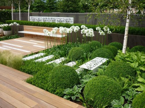 Buxus and white agapanthus