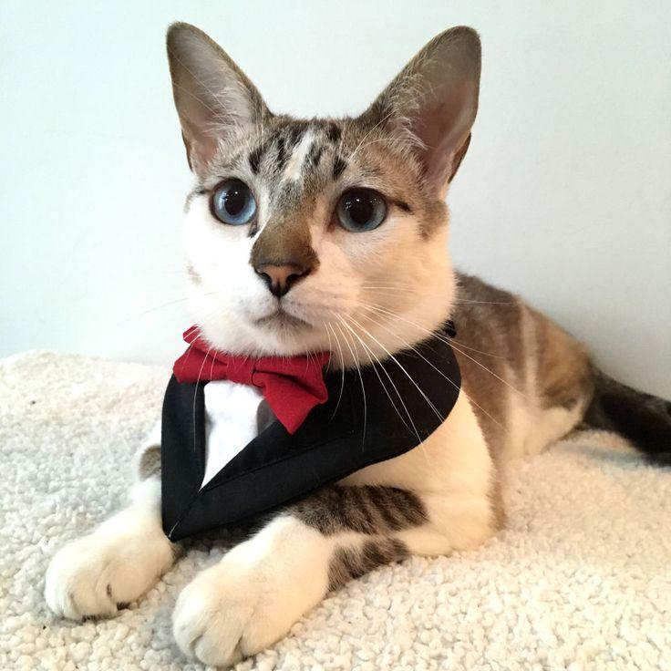 BANDANA SMOKING JAMES - elegante, chique e fino! É nesse traje que seu gato poderá receber suas visitas em casa ou qualquer data comemorativa. Fechada em velcro. Consulte disponibilidade. E-mail: loja@fun4cats.com.br