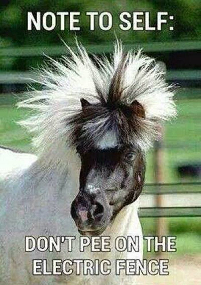 HORSE MEMES FUNNY image memes at relatably.com