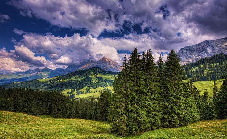 The firs between the mountains