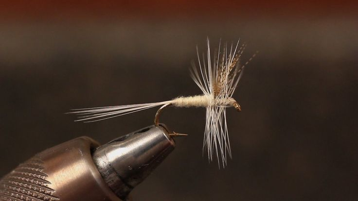 Detailed instructions for tying a Catskills style Light Cahill dry fly.