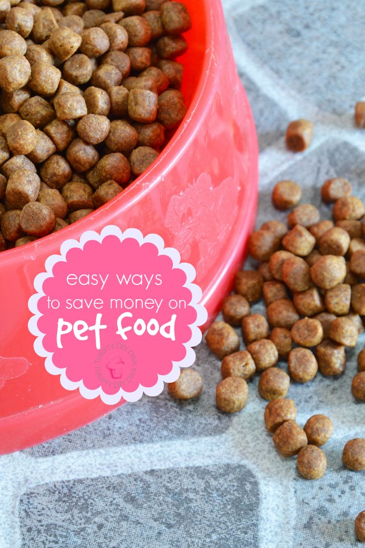 buy cheap mens sneakers online 5 Ways to Save Money on Pet Food   from samples to coupons to feeding schedules  these tips will help you spend less on your pets each month