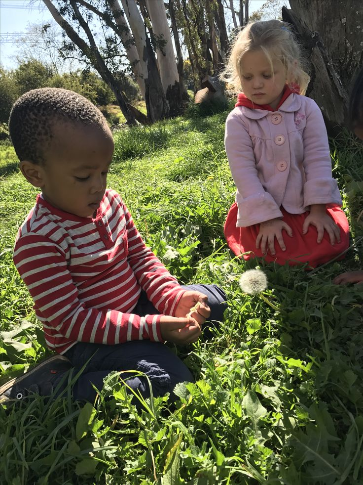 Blowing dandelions in the school park in Sandton field and study parks