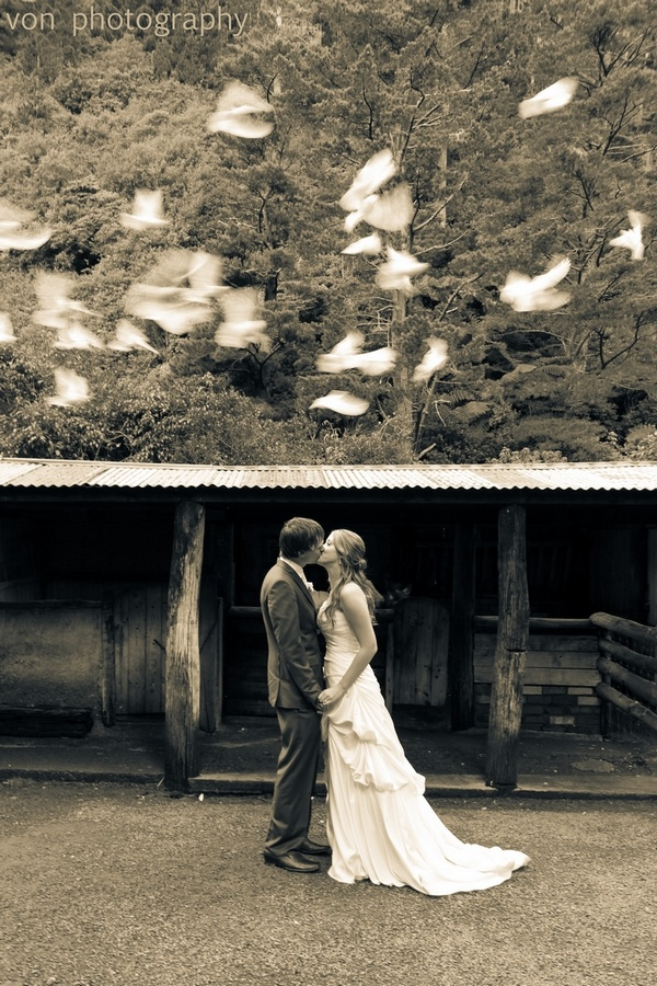 Doves - copyright wedding photo by Von Photography
