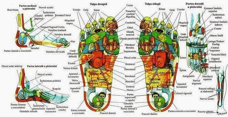 """Un proverb chinezesc spune ca """"Surasul vine de la picioare"""". La nivelul talpilor tale exista mii de terminatii nervoase aflate intr-o legatura directa cu organele vitale ale corpului. Prin masarea unor puncte specifice putem nu numai sa ne relaxam intr-un mod profund, ci sa contribuim si la eliminarea eventualelor bocaje ce pot exista la nivelul…"""