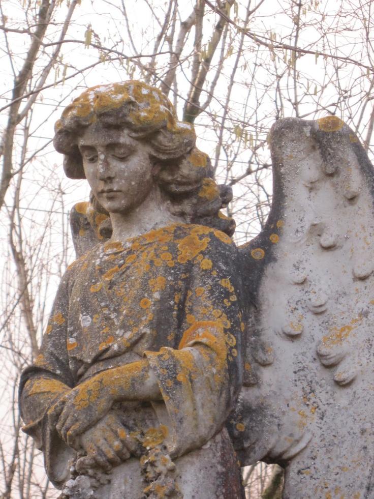 Angela's Dartmoor Angel