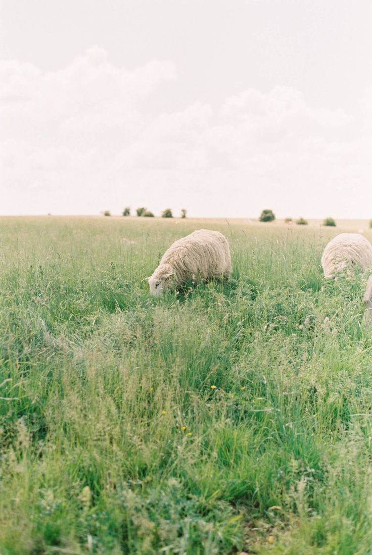 A charming English countryside summer wedding | So…