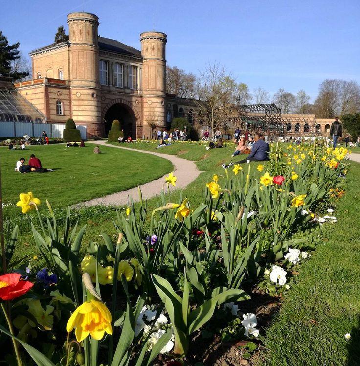 Ein traumhaftes Frühlingswochenende liegt hinter uns  Der Botanische Garten blüht im Moment phantastisch  wo habt ihr das tolle Wetter am #Wochenende genossen?  #visitkarlsruhe #visitbawu #bwjetzt #karlsruhe #botanischergarten #flowerpower #narzissen #flowers #naturelovers #travel #explore #explorekarlsruhe #Stadtansichten #bluesky #citylife #weekend #summerfeeling #summertime #diewocheaufinstagram #spring
