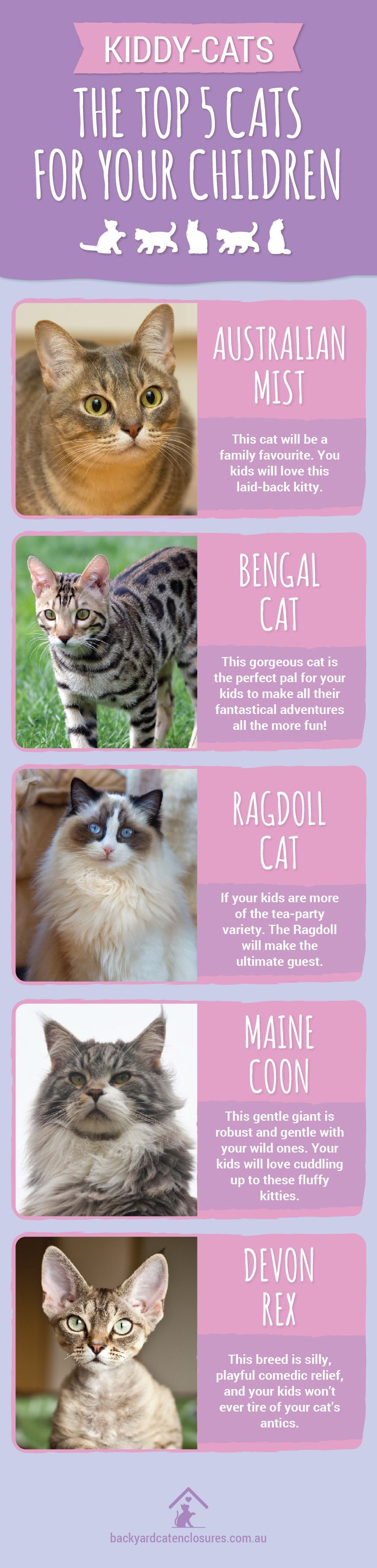 13 best AUSTRALIAN MIST CAT BREED images on Pinterest