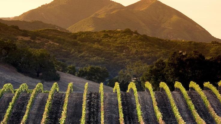 California Wine Country  Arroyo Grande, CA