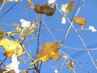 WWW Wiersze Wycieczki Wspomnienia: Haiku o jesieni: Milczenie opuszczonej łąki