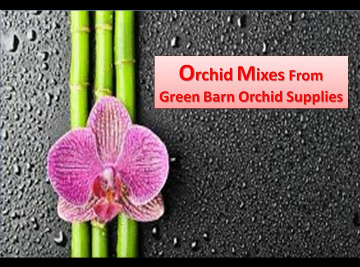 Are you looking for the best online seller of orchid mixes in Florida? You can find the best price deals available on the Green Barn Orchid website.