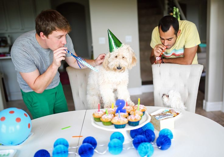 the sweetest thing blog, emily gemma, fitz gemma, mini golden doodle f1b, okefeild acres dog breeder, pupcakes recipe, cake recipe safe for dogs, birthday cake for dogs, how to make cupcakes safe for dogs, recipe for pets birthday, dessert for puppies, dog birthday party ideas, how to make birthday cake for a dog, gold kitchen aid mixer, quartz cambria britannica