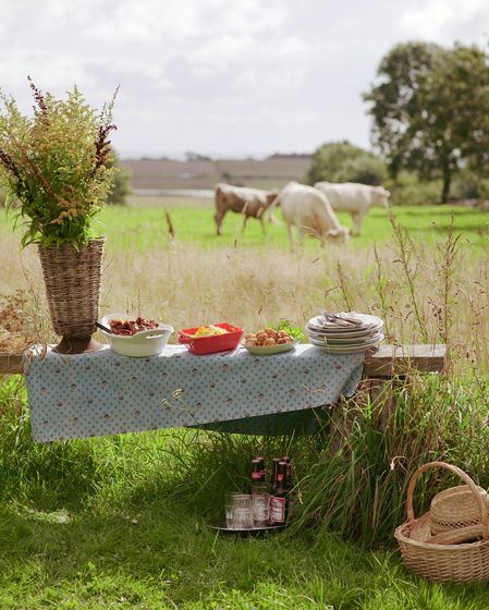 Cows Grazing in The Meadow ~ Whilst Enjoying A Picnic.