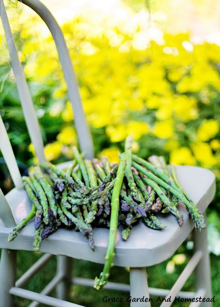 Comprehensive guide to starting your asparagus and taking care of them through the season.