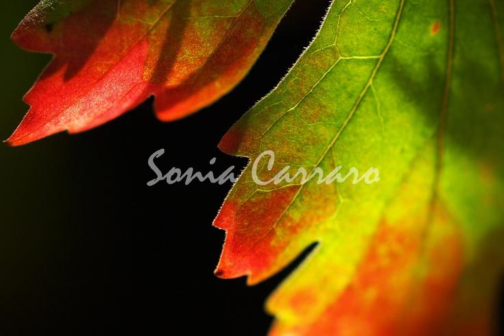 Podzim 1 Autorská fotografie .