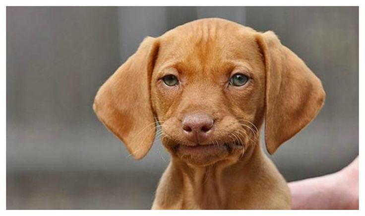Посмотрите очень смешные фото собак в разных ситуациях, разные породы