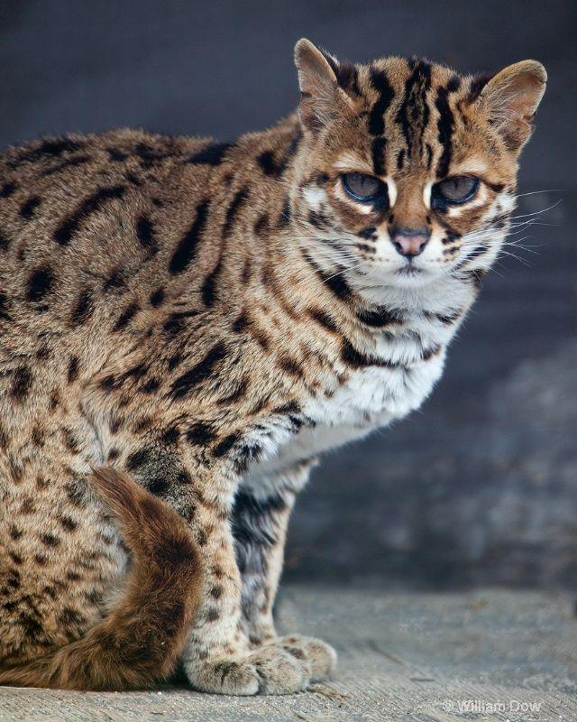 big cat sanctuary arkansas