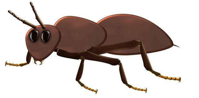 Τα μυρμήγκια δεν πρόκειται να τα δείτε στην κουζίνα σας αν δεν τα 'προσκαλέσετε'… που σημαίνει, πως για να έρθουν, υπάρχουν βρομιές, ψίχουλα, λίπη που δεν έχετε καθαρίσει, φαγητά αφημένα κλπ.Πρώτα απ' όλα λοιπόν, καθαρίζετε την κουζίνα και κυρίως τον πάγκο και τα ντουλάπια που συνήθως υπάρχουν μυρμήγκια. Είναι επίσης σημαντικό οι συσκευασίες με τα […]
