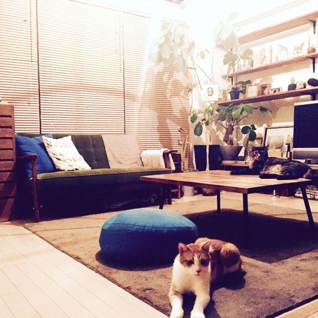 Megumiさんの、部屋全体,観葉植物,無印良品,照明,ナチュラル,写真,雑貨,アンティーク,DIY,北欧,多肉植物,マンション,ドライフラワー,生花アレンジ,ねこのいる日常,ふるいもの,ハリネズミのいる生活,こどもと暮らす,みどりのある暮らし,猫ゲージ,のお部屋写真