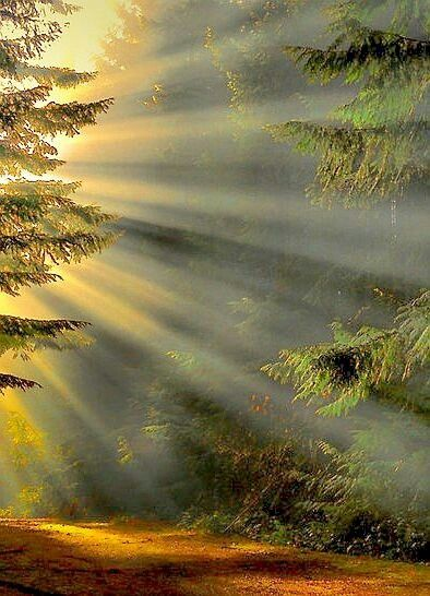 brilliant rays of sun through the trees +