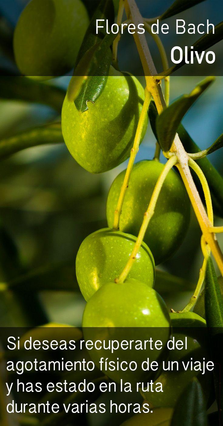 El olivo induce un flujo más natural de la energía, relajando la tensión producida por la fatiga, lo cual permite mejorar la calidad del descanso y optimizar el tiempo de recuperación.