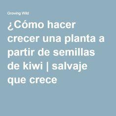 ¿Cómo hacer crecer una planta a partir de semillas de kiwi | salvaje que crece
