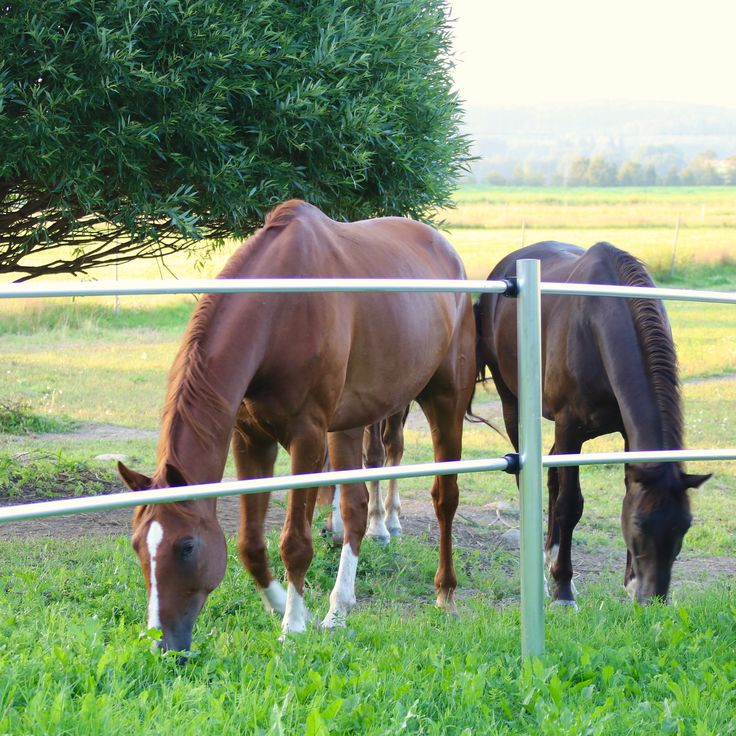 Our best fences ever! Electric fence for horses. Easy to install, safe to the horses. The pic is from our pasture. The fences are made in Finland! See yourself www.lapinjarvi.net or www.silber.fi