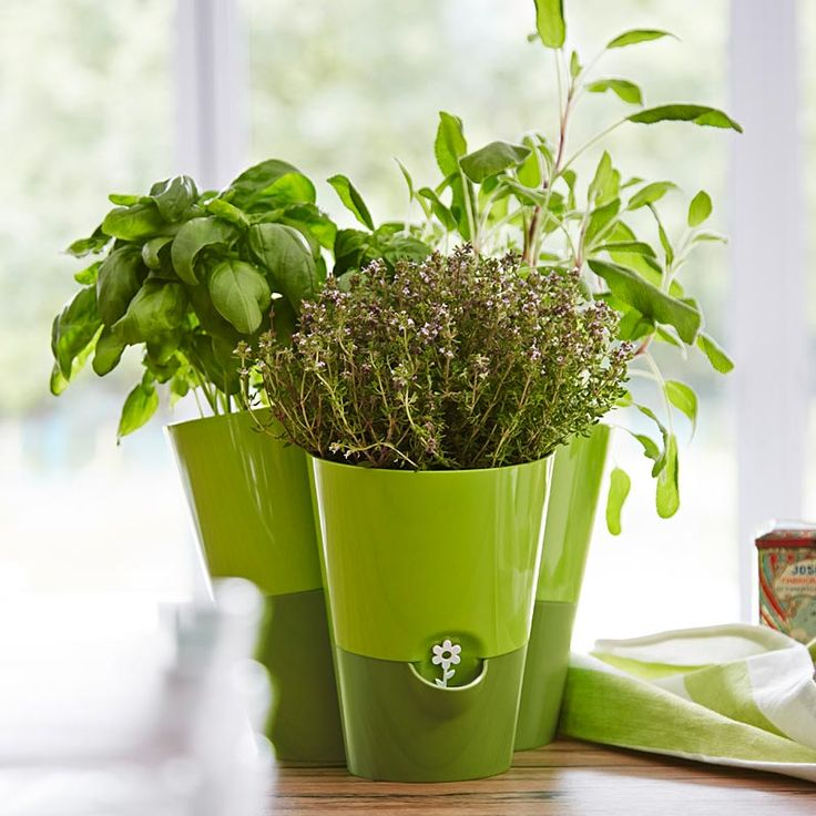 FRESH HERBS Trio herb pot–EMSA